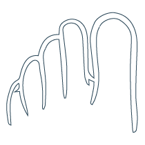 Nail-Conditions icon